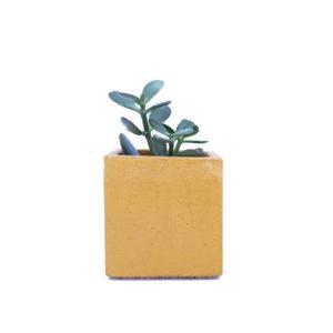 Pot à succulente_jaune